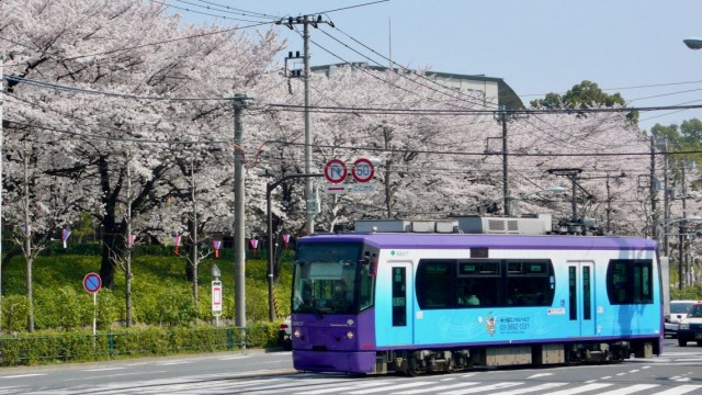 A small tram during Cherry Blossum Time in Tokyo